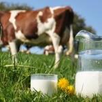 Mleko domaćih proizvođača za robne rezerve