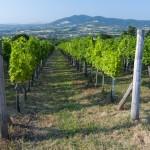 Vinogradarstvo u Srbiji na prekretnici