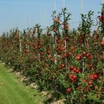 Novembar: Idealan mjesec za sadnju voća