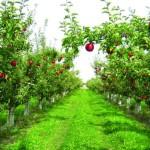 Zaštita voćaka od prolećnih štetočina