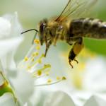 Martovski radovi u pčelinjaku