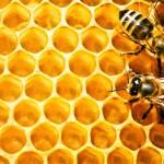 Pčelinjak u aprilu – prolećna paša, zamena saća