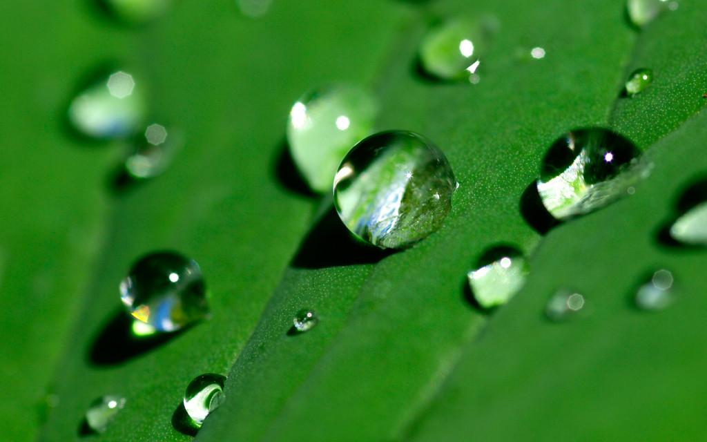 water-drops-green-leaf-2880x1800