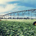 Odnos potreba biljaka za vodom