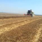 Žetveni ostaci poboljšavaju sastav zemljišta