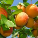 AGROEKONOMIST - Ekonomika - Funkcionalna amortizacija